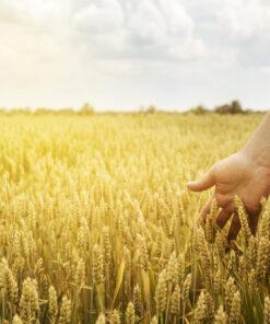 Аграрное производство