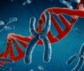 Цитогенетика